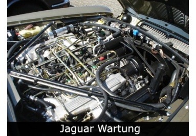 Jaguar Wartung